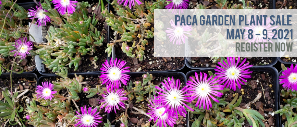 Succulent green plans with pink and white flowers in pots with skinny pink petals. Text reads Paca Garden Plant Sale, May 8 and 9, 2021, Register Now.